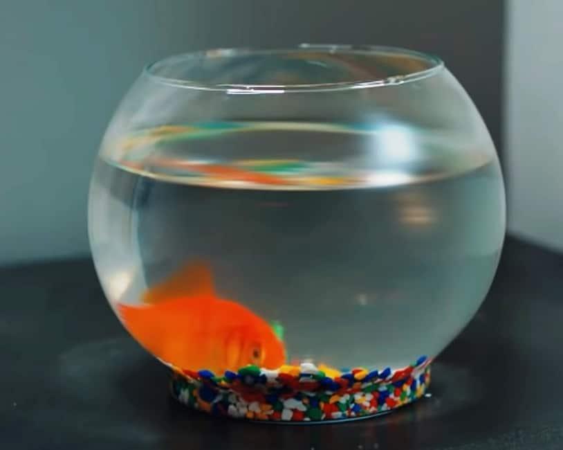 Bay Yanlış Dizisi Ezgi'nin Balığı Penelope